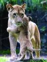 Lionandbabylion